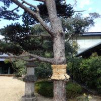 Nezu-museet, sett fra hagen