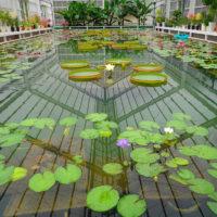 Drivhus ved varme kilder, Beppu
